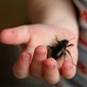 'Stink Bugs' – A Low Maintenance Pet