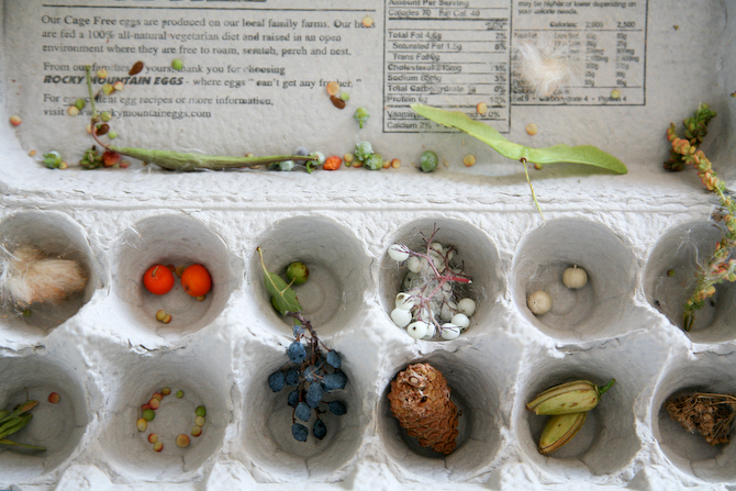 Seeds Travel by Water Seeds Travel Disperse